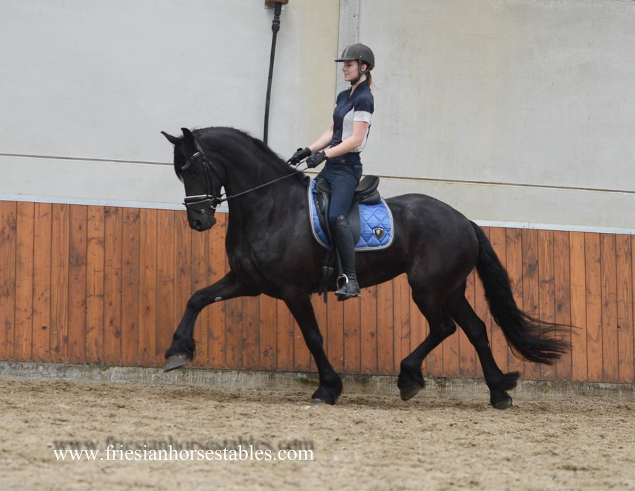 Yiska is sold to Katharina in Germany - Congratulations with this beautiful mare!!
