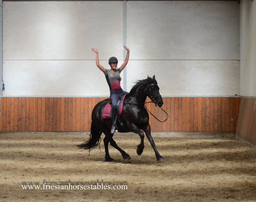 Wille is sold to Danny, Priscilla, Luca and Vincenzo in Holland - Congratulations with this great mare!!