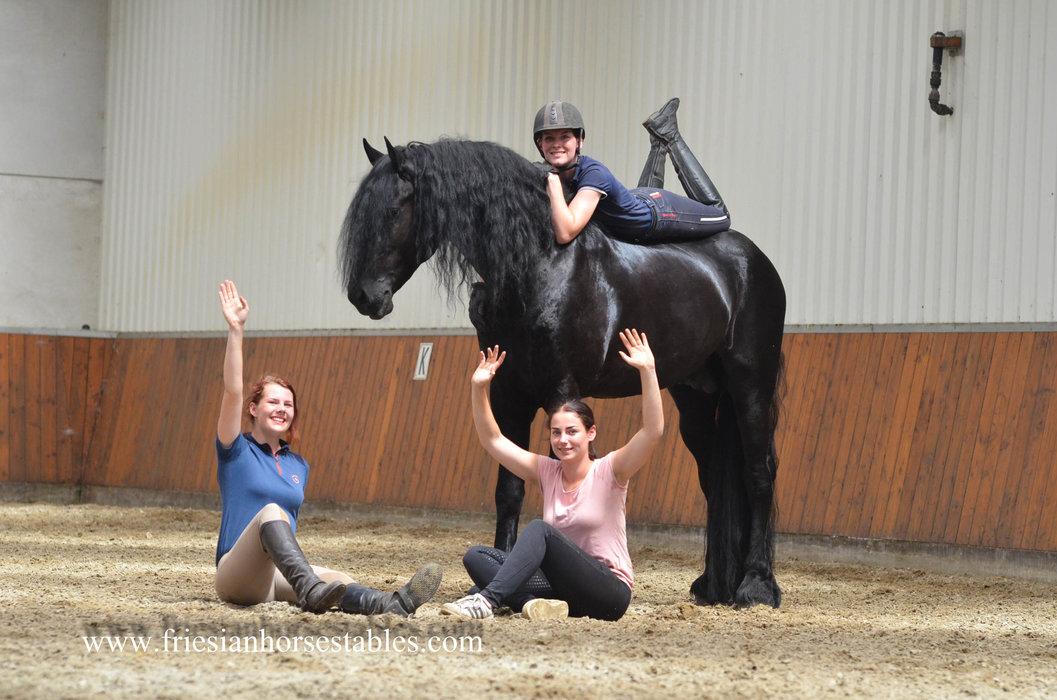 Wannahave - Haitse 425 Sport-Elite x Wierd 409 Sport - Toekomstig Sport paard - Ster hengst met bijzonder veel uitstraling!