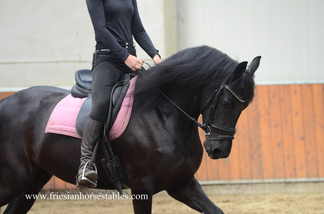 Wiesje is verkocht aan Mandy in Nederland - Van harte gefeliciteerd deze knappe friese dame!