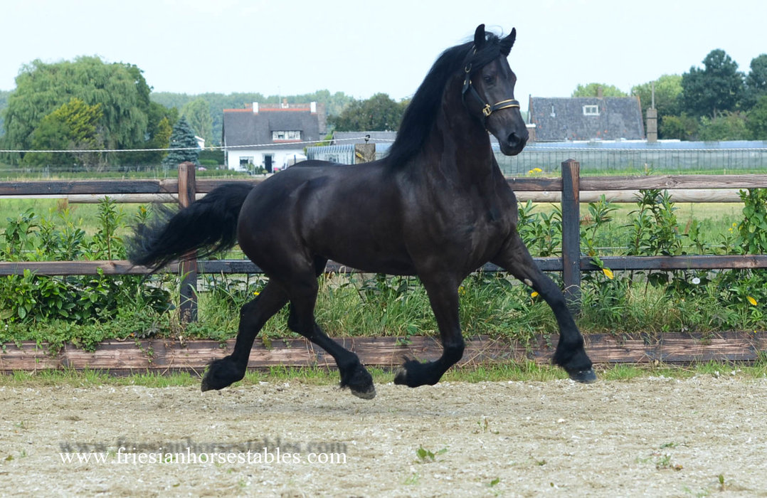 Yiska is sold to Katharina in Germany - Congratulations with this beautiful mare!
