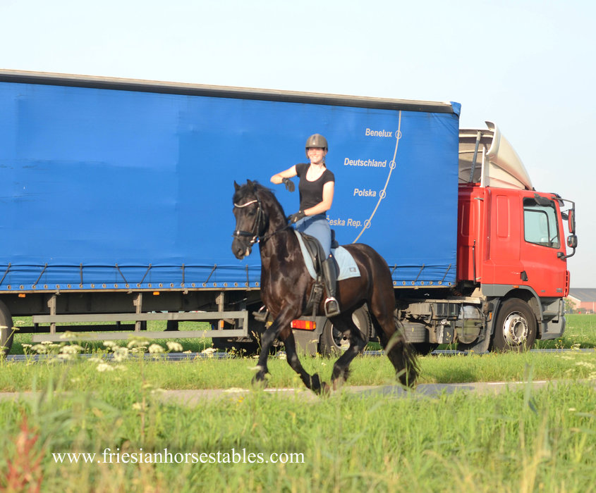 Tymen is sold to Michelle in Holland - Congratulations with this beautiful sports gelding!!