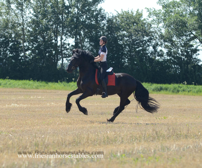Alex is sold to Loes in The Netherlands - Congratulations with this special stallion!