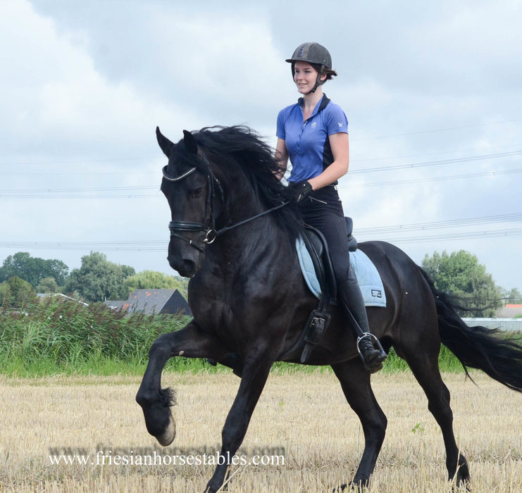 Aaike is sold to Eva and Sara in Holland - Congratulations with this beautiful sports gelding!!
