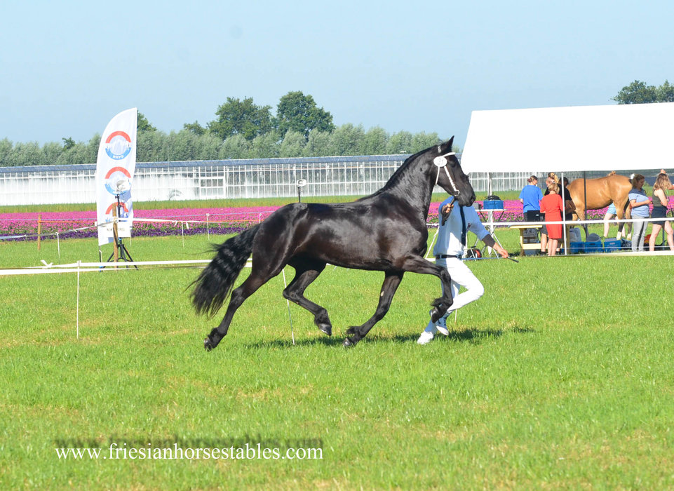 Black Beauty - Jouwe 485 Sport x Loadewyk 431 Sport-Elite - It's all in the name!! Toekomstig sport paard!