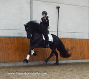 Xander is sold to Philip in Belgium - Congratulations with this fairytale looking horse!!