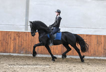 Douwe - Markus 491 Sport x Dries 421 Sport - High quality Ster stallion with a great expression!!