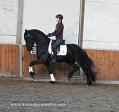 Drewes is sold to Suzanne in The Netherlands - Congratulations with this handsome sweet boy!!