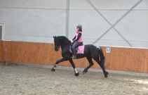 Vriend - Beart 411 Sport+Pref x Krist 358 - Fantastic moving stallion!!
