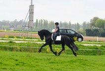 Robin - Alke 468 Sport x Feitse 293 Pref - First premium as a foal - Crème de la Crème!