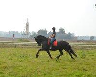 Lieke - Tsjalke 397 x Jakob 302 Sport - Fairytale looking 3rd Pr. Stb mare with long manes!