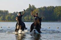 Treasure - Djoerd 473 Sport x Sape 381 Sport - Good moving stallion with full papers!