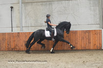 Ulco - Tsjalle 454 Sport x Pike 316 - Amazing looking STER Stallion with UPHILL Movements!!