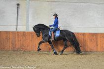 Zep - Rindert 406 Sport x Adel 357 Sport - Fijn toekomstig sport paard!
