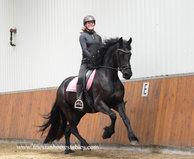 Wiesje - Thorben 466 Sport-Elite x Fabe 348 Sport+Pref - Fancy 4 year old Friesian mare with great movements!!