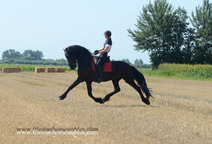 Alex - Tsjalle 454 Sport x Feitse 293 Pref - Great mover with a lot of Flair!!