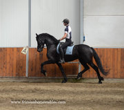 Wiekelien is sold to Miriam in Germany - Congratulations with this beautiful mare!!