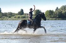 Yeb - Tsjalke 397 x Tsjerk 328 Sport+Pref - Very handsome stallion with excellent gaits!!