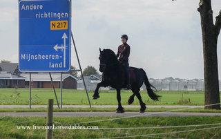 Rienk - Norbert 444 Sport+Pref x Tsjalke 397 - Dressuur crack voor het hogere werk! Junioren paard!