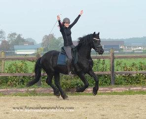 Haike - Haike 482 Sport x Tsjalle 454 Sport+Pref - Very pretty stallion with good movements!