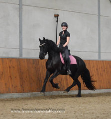 Black Beauty - Jouwe 485 Sport x Loadewyk 431 Sport-Elite - It's all in the name!! Quality sports mare for the future!