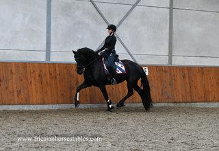 Bijou is verkocht aan Ilse in Nederland - Van harte gefeliciteerd met deze mooie merrie - Liefde op het eerste gezicht!!