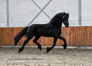 Boni is sold to Anne in the UK - You two are a dream come true - looking forward to hear more about you two in the future dressage competitions!!