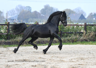 Age - Thorben 466 Sport-Elite x Tsjalle 454 Sport+Pref - Spectacular mover - great personality!!