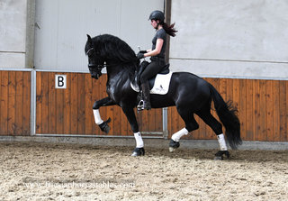 Watch Me is sold to one lucky family Rijcken in The Netherlands - Congratulations with this SPECIAL Ster stallion!!