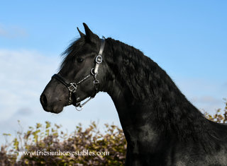 Freark is sold to Franziska in Germany - Congratulations with this future sports stallion!!