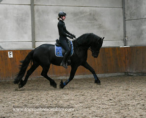 Gerke - Jehannes 484 Sport x Sape 381 Sport - Big, Bold and Beautiful black stallion!!