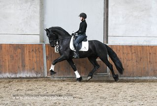 Geart is sold to Jessica in the UK - Congratulations with this fantastic horse!!