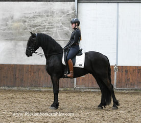 Haitse - Tsjalle 454 Sport-Elite+Pref x Onne 376 Sport - Gorgeous tall Ster gelding with great movements and a nice personality!