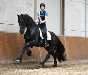 Hero - Hette 481 Sport x Dries 421 Sport - Great moving stallion out of a CROWN AA mare!!