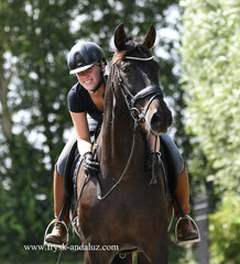 Zambia - Very pretty Andalusian mare with lots of expression - Almost suitable for every rider!!