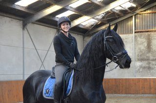 Timo - Alwin 469 x Sibald 380 - Brilliant moving stallion out of a Ster+Sport mother