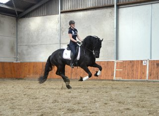 Wypke is sold to Martine in Holland - Congratulations with this talented Ster stallion!