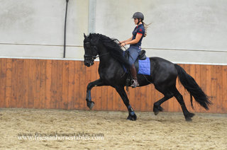 Windsor is sold to Mary Ann & Jeff in the USA - Congratulations with this super special Ster stallion!!