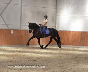 Wendy is sold to Marzena in Poland - Congratulations with this excellent quality mare!!