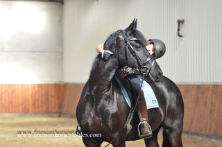 Wicky is sold to Aude in France - Congratulations with this lovely mare!!