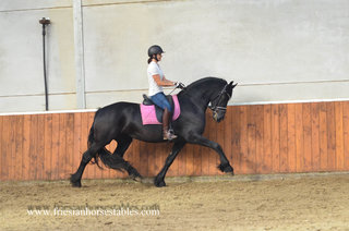 Ynke is sold to Nicole in Germany - Congratulations with this lovely pregnant mare!!
