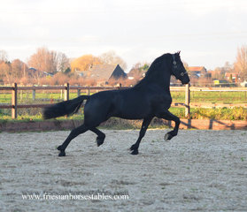 Aike is sold to Aurélie in France - Congratulations with your 5th friesian from us!!