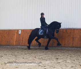 Axel - Onne 376 Sport x Teunis 332 Sport+Pref - Well developed stallion with great movements!