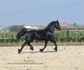 Baron - Maeije 440 Sport x Aan 416 - Lovely personality, smooth mover and nice expression!