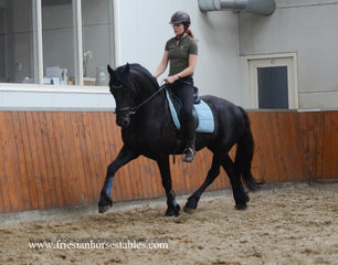 Melle is sold to Anita in Holland - Congratulations with this amazing, gentle, funny and talented gelding!!