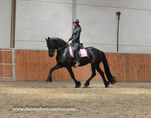 Wiesje is sold to Mandy in The Netherlands - Congratulations with this amazing sweet mare!