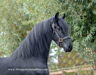 Alger is sold to Francis in The Netherlands - Love at first sight - Congratulations with this pretty boy!!