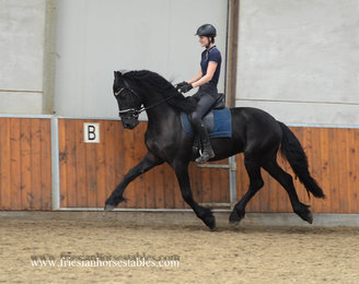 Ate is sold to Andrea and Lisette in Holland - Congratulations with this dream friesian!!
