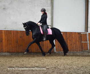 Benthe is sold to Demi in Holland - Congratulations with this beautiful 3rd premium studbook mare!!