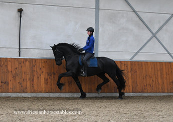 Aachje is sold to Claudia in Holland - Congratulations with this fantastic mare!!